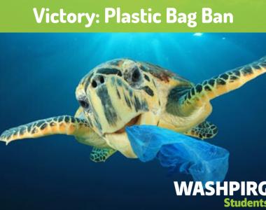 Washington state bans single-use plastic grocery bags